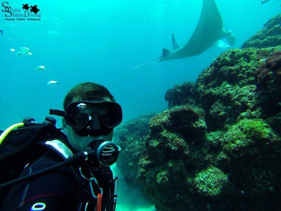 dive with mantarays