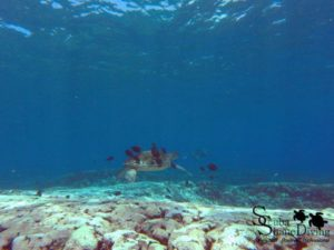 Dive Flinders Reef