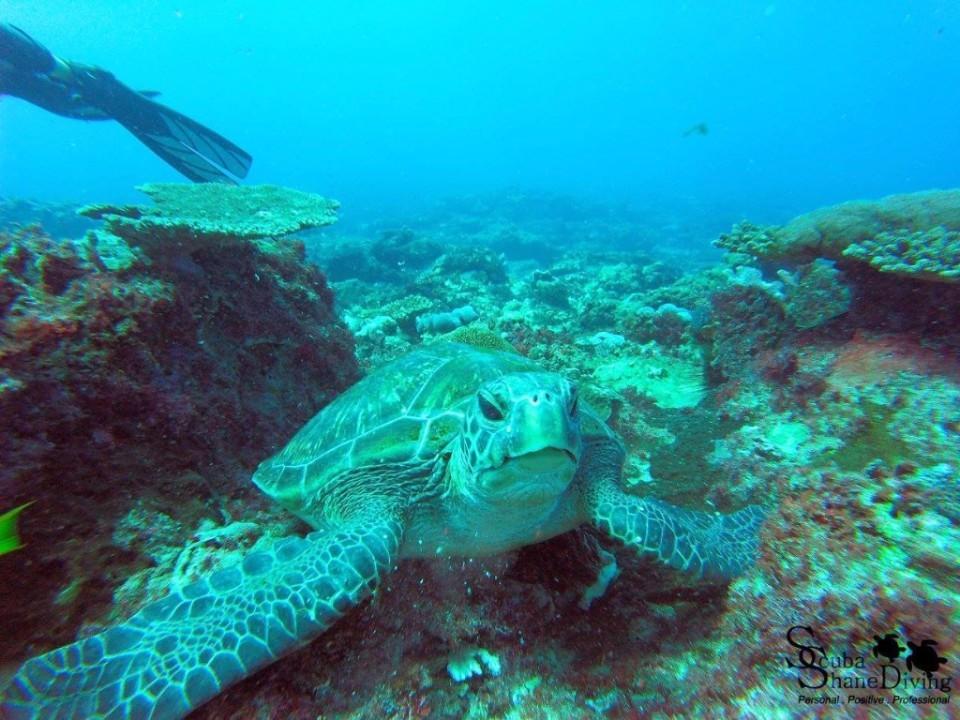 dive with turtles brisbane