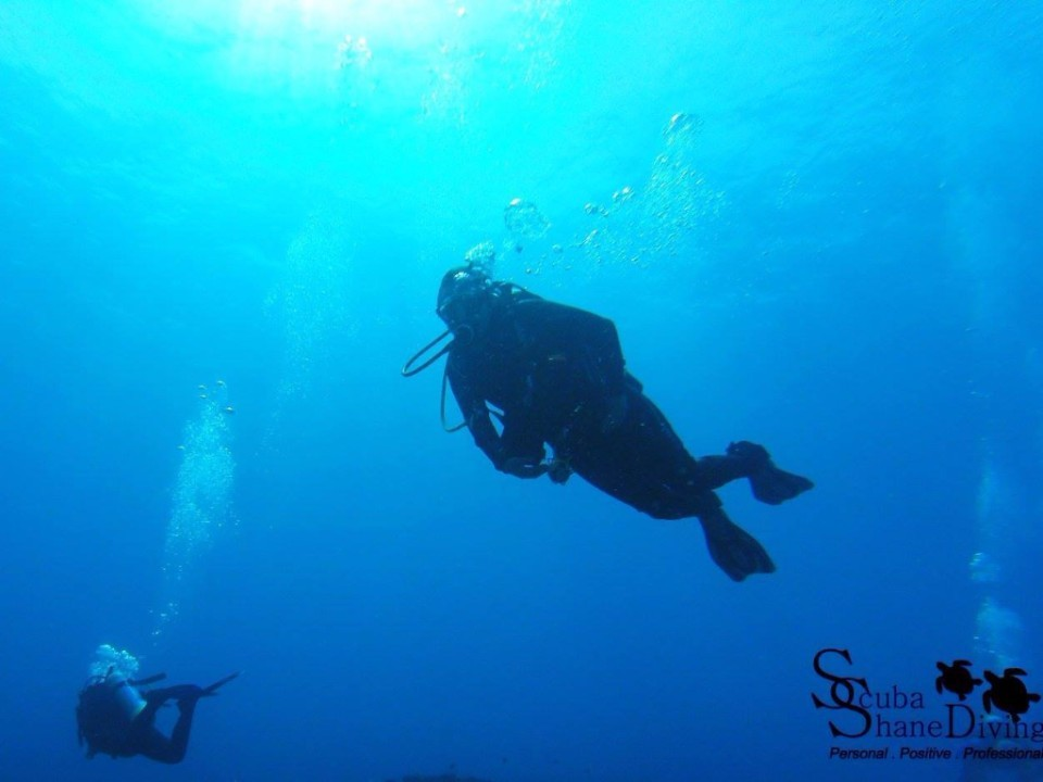 Brisbane Diving