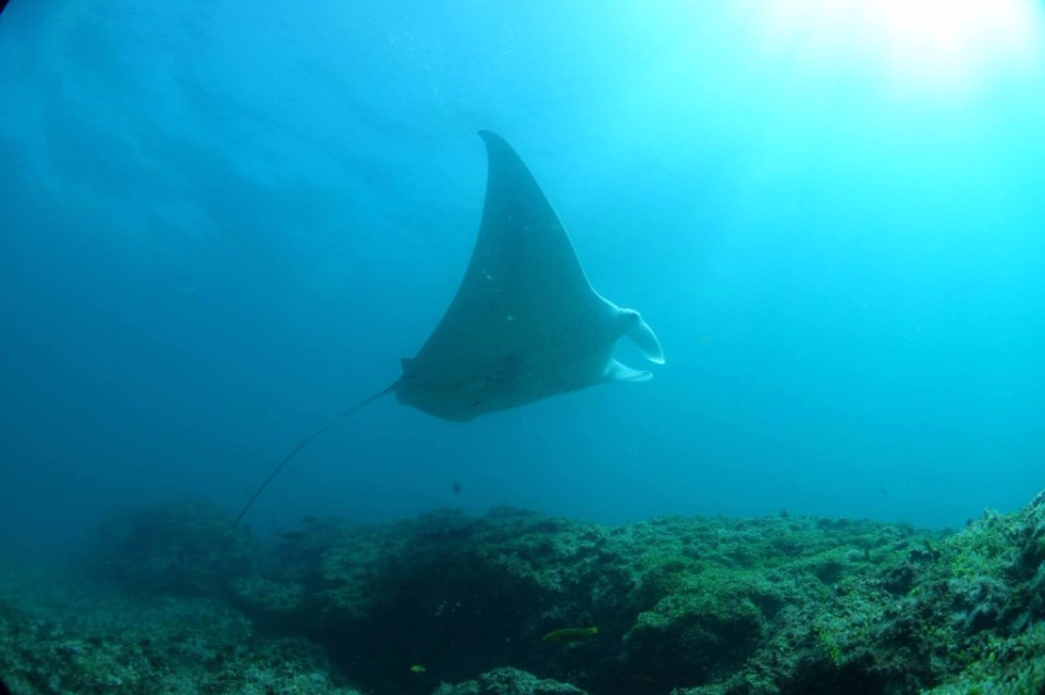 dive with mantas
