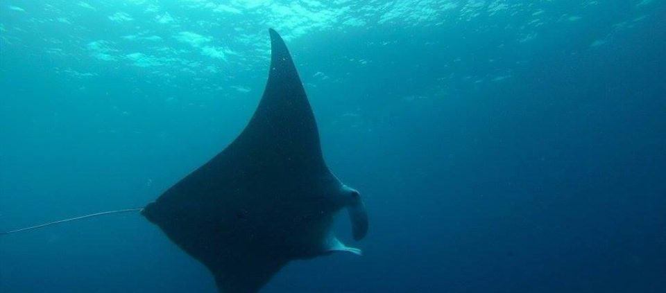dive with mantarays brisbane