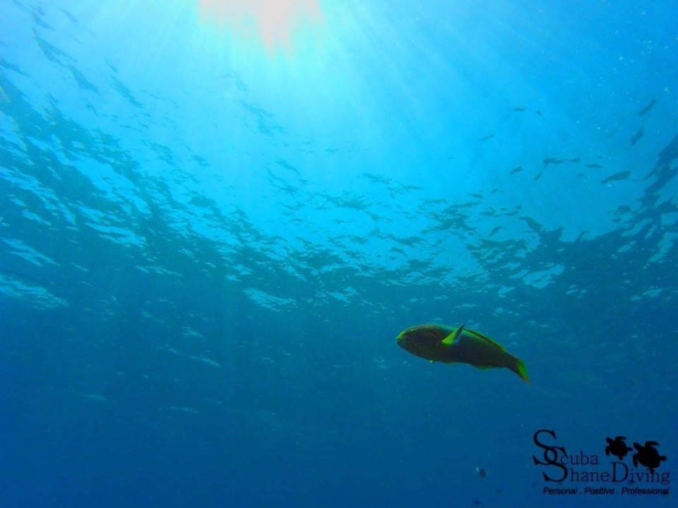 Brisbane Scuba Diving Courses