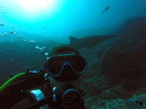 Dive Stradbroke Island