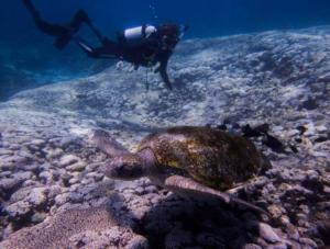 flinders reef moreton island