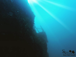 hmas brisbane wreck diving