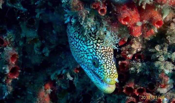 julian rocks byron bay dive